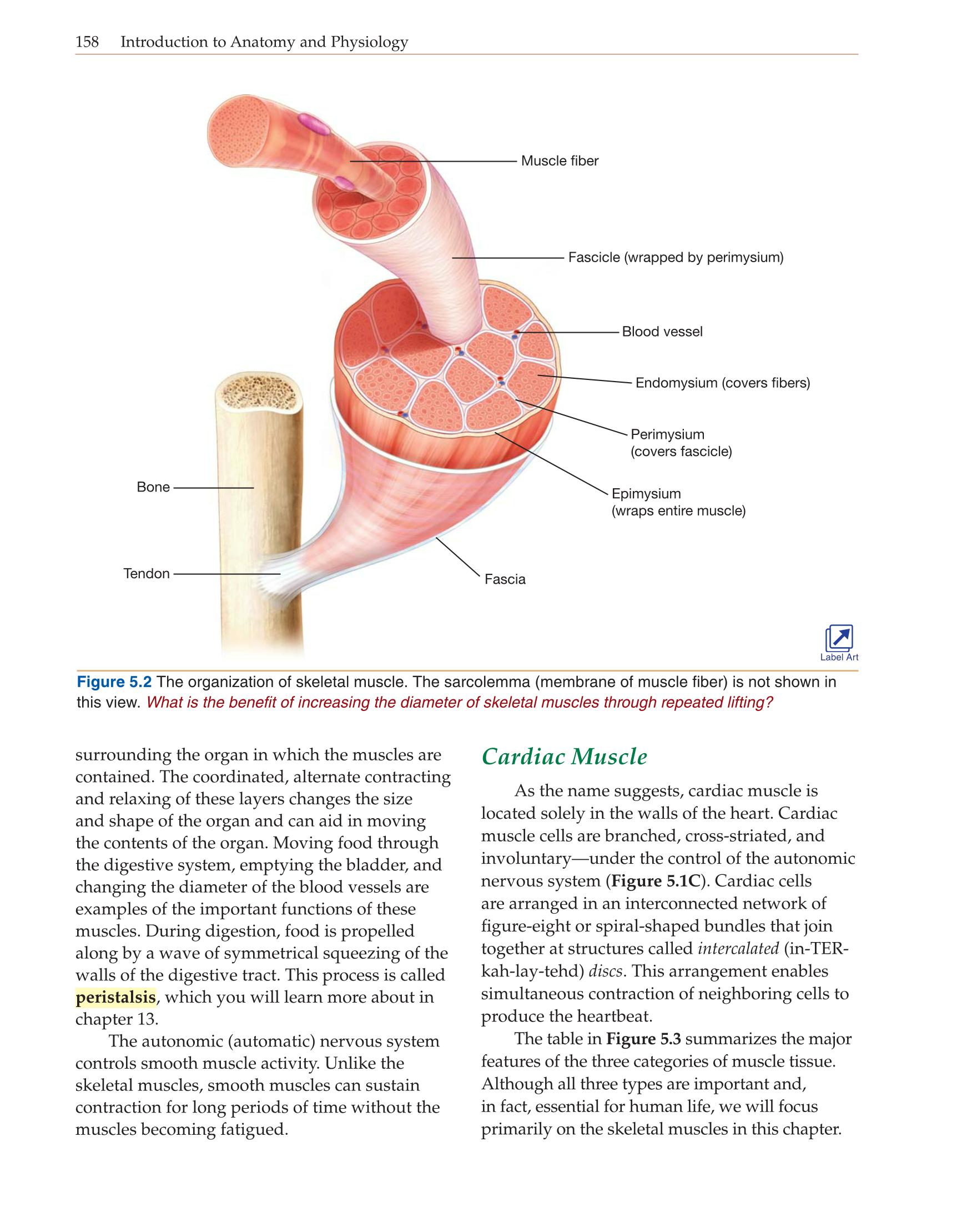 Großzügig Anatomie Und Physiologie Ii Online Bilder - Menschliche ...