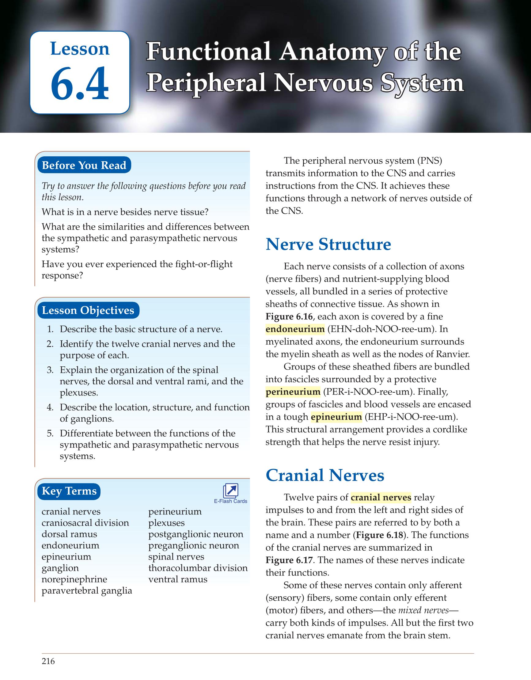 Chapter 7 Answer Keys Human Anatomy 6937210 - seafoodnet.info