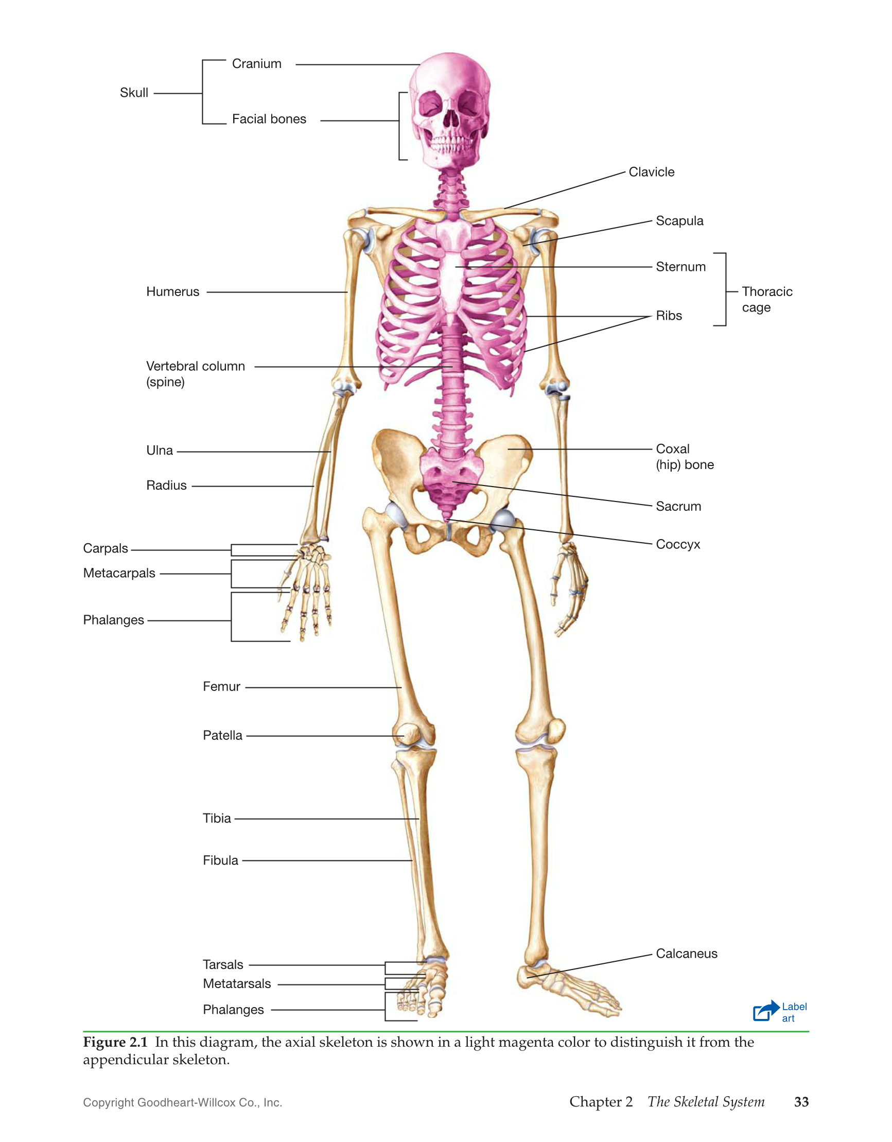 Printable Introduction To Medical Terminology 1st Edition Page 33