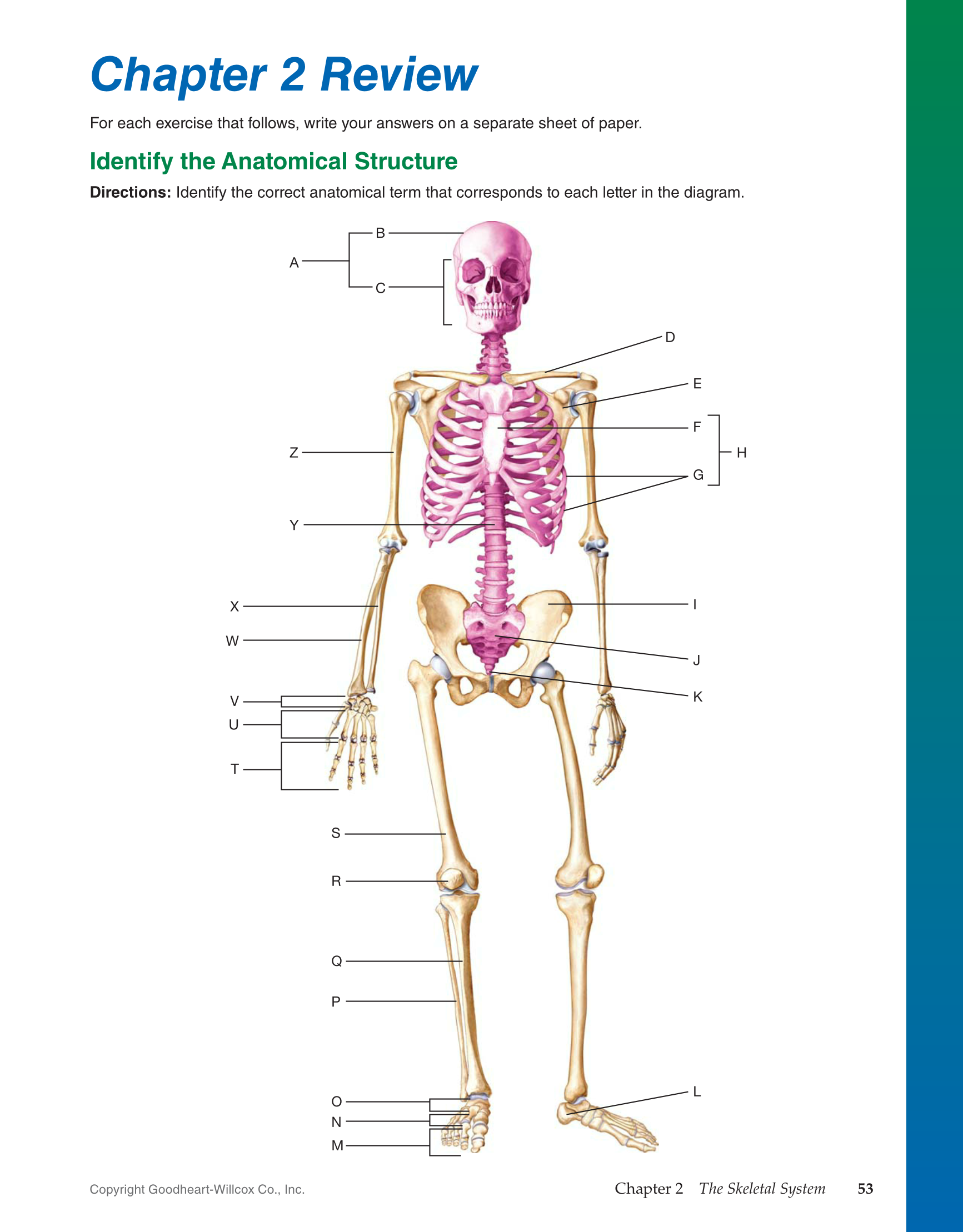 Printable Introduction To Medical Terminology 1st Edition Page 53